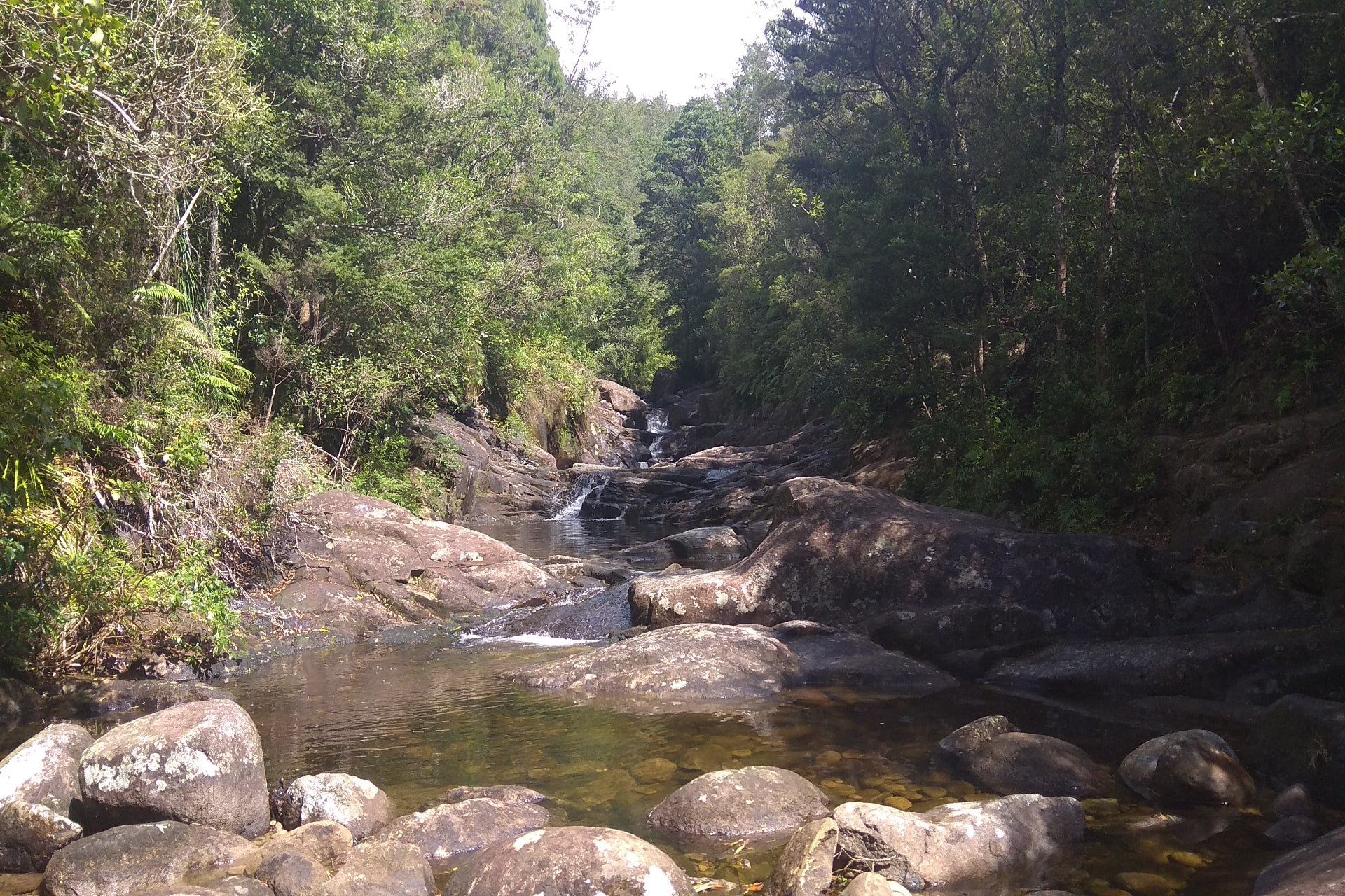 Aongatete Bush Tracks and Swimming hole