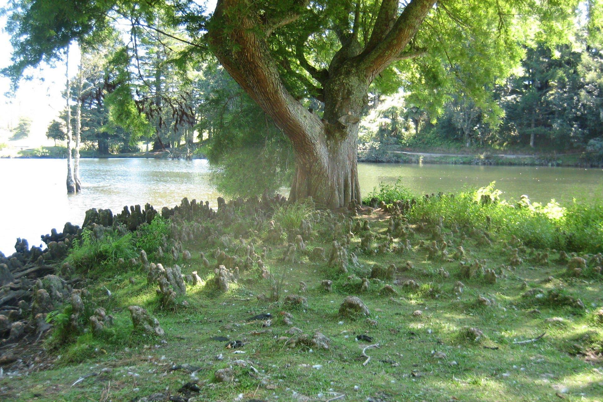 Odd-Tree-Roots-McLaren-Falls
