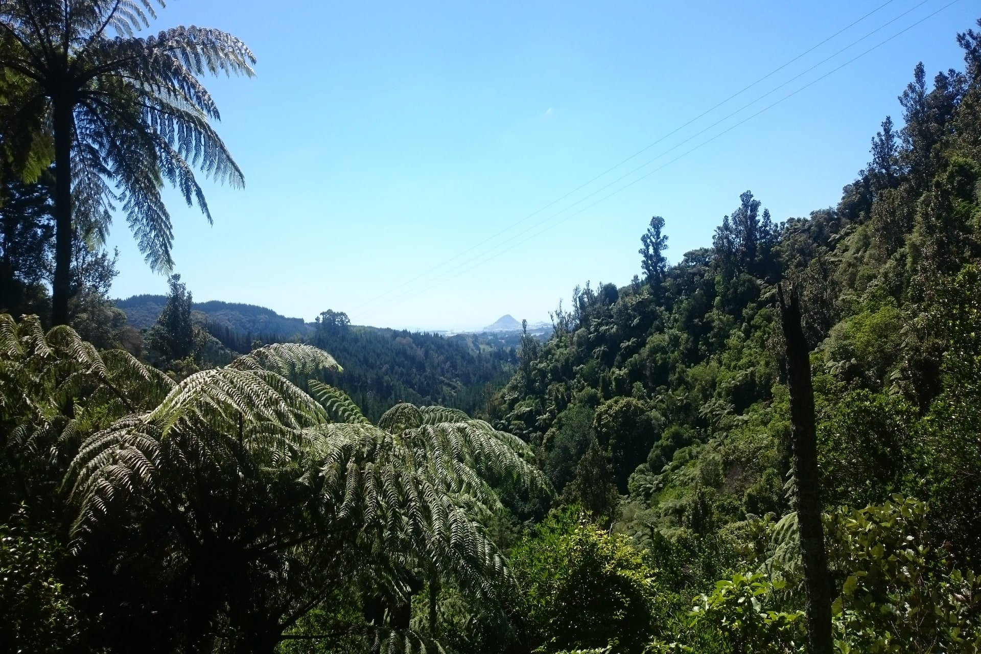 kaiate-falls-view-from-carpark