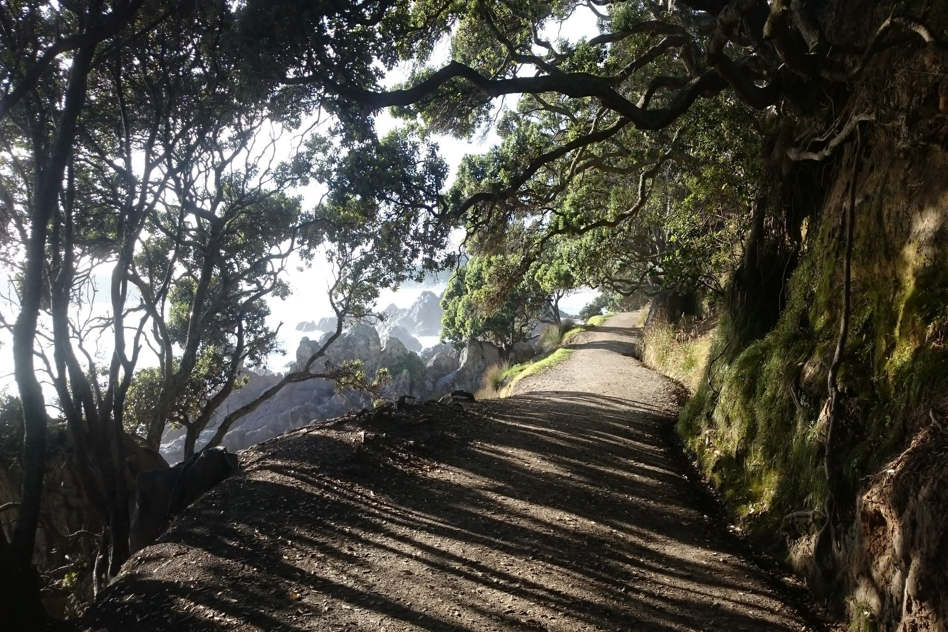Base-walking-track-mount-mauao