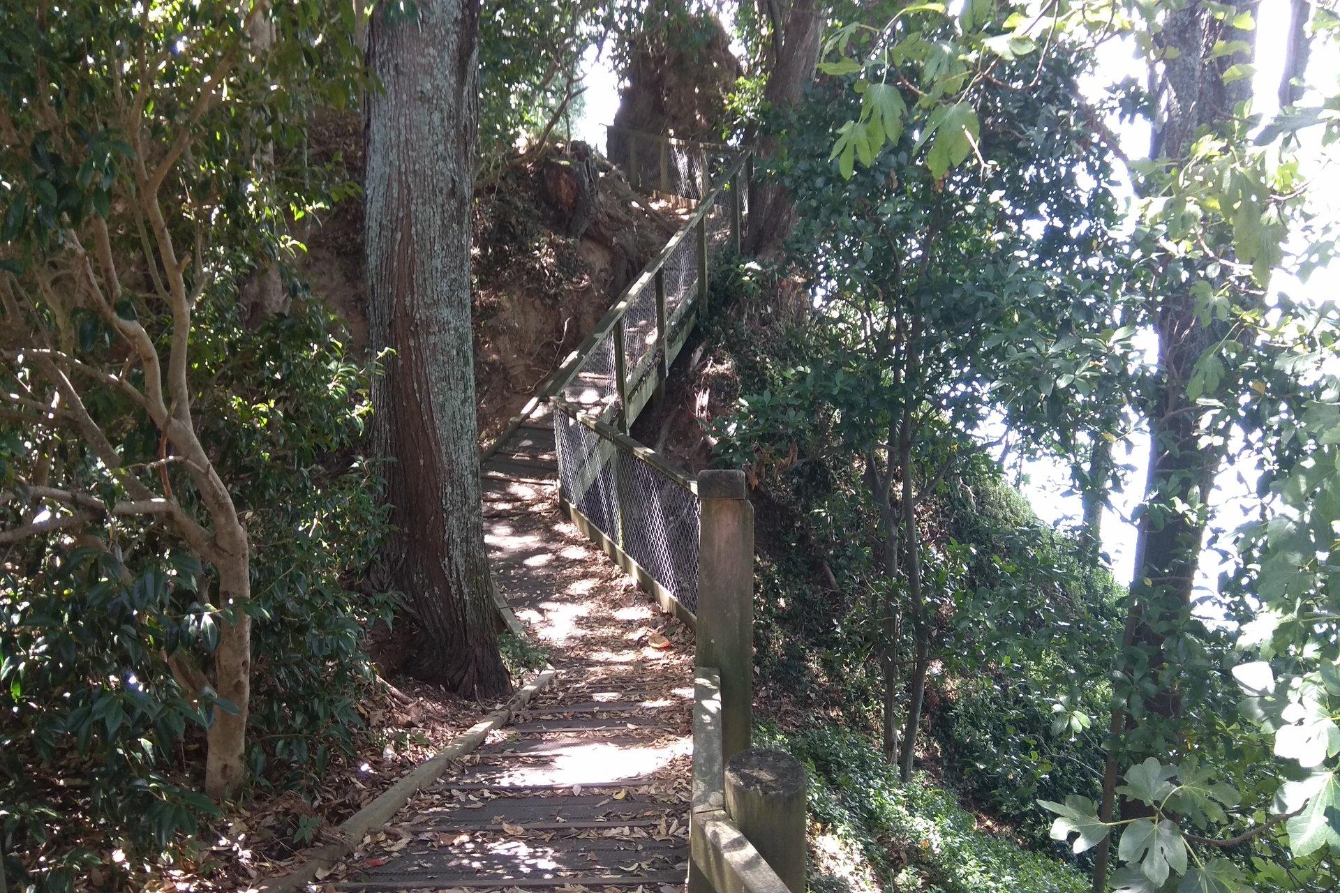 Omokoroa-peninsula-walkway-track