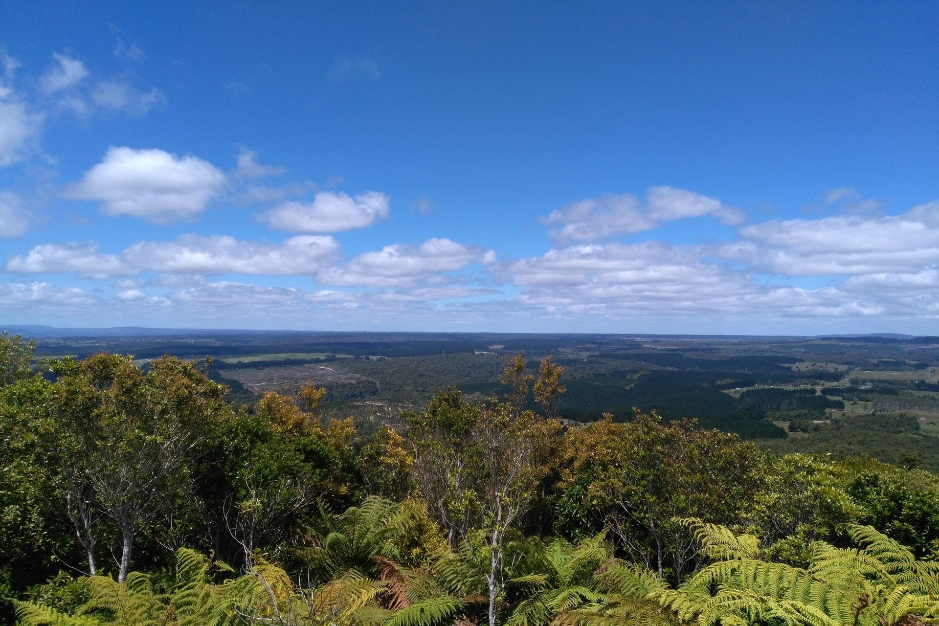 Otanewainuku-summit-view-tauranga