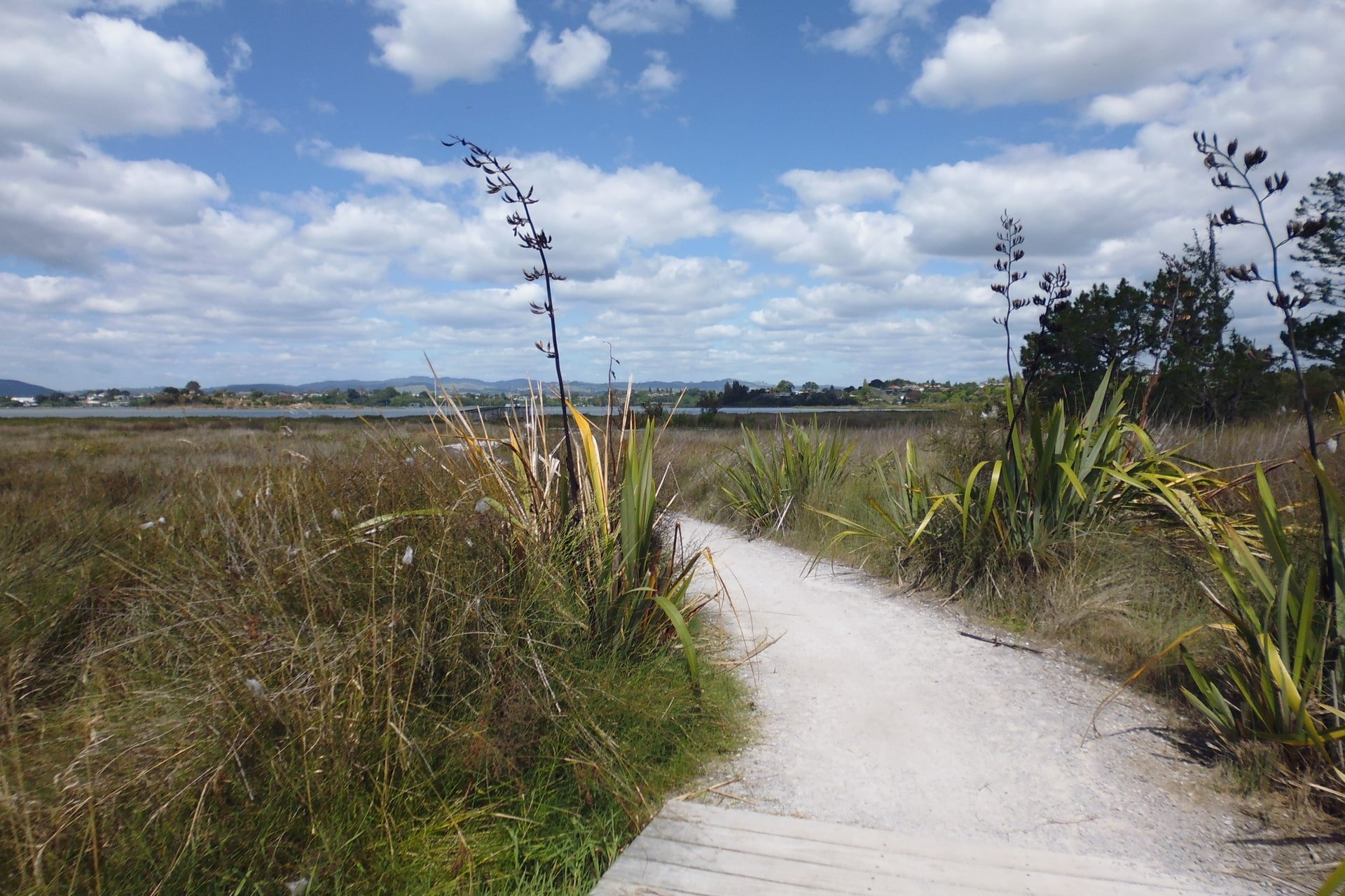 Waikareao Estuary Walkway