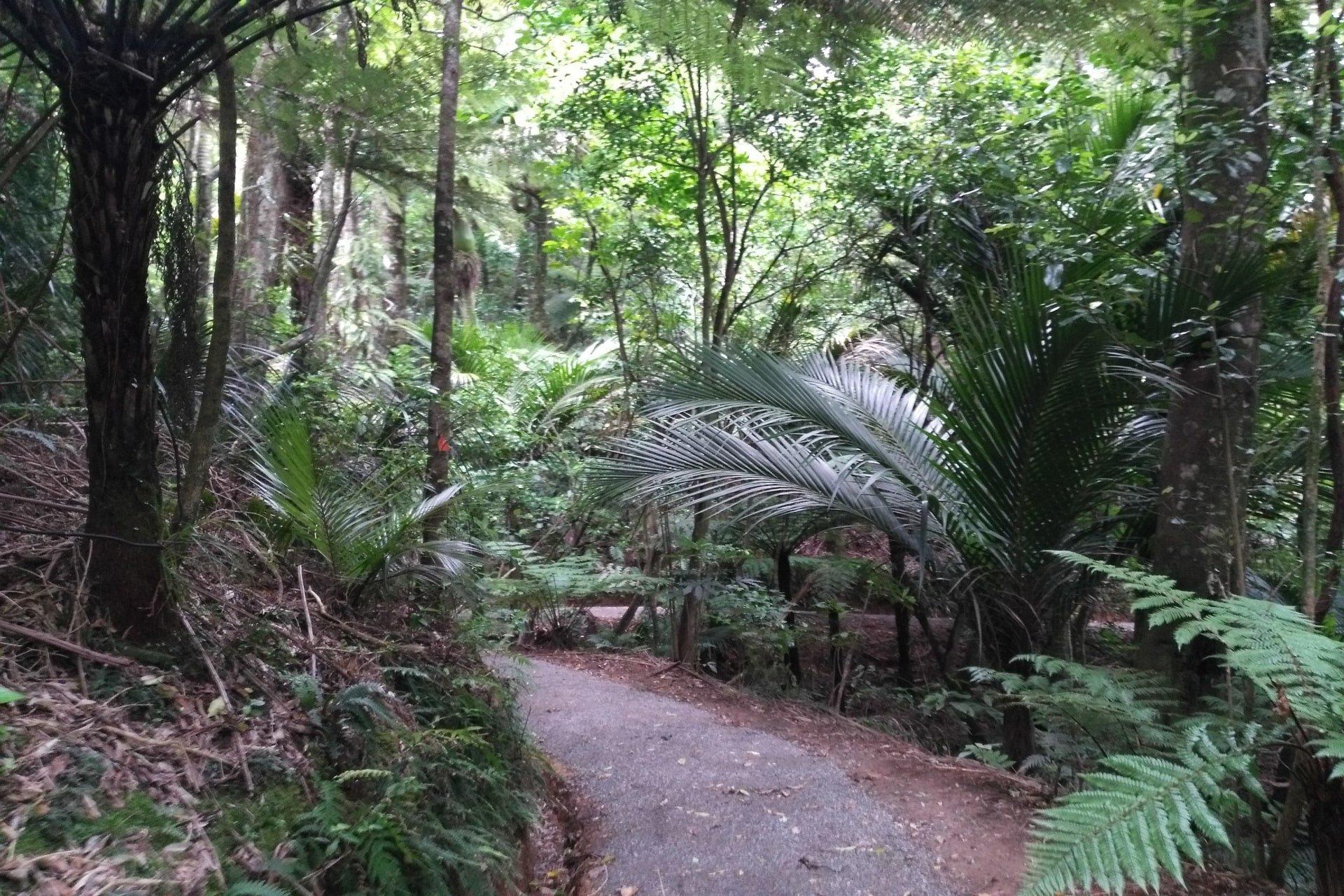 Tuahu-Kauri-walking-track