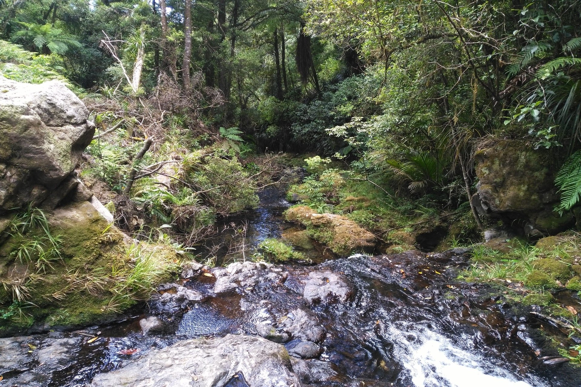 creek-otanewainuku