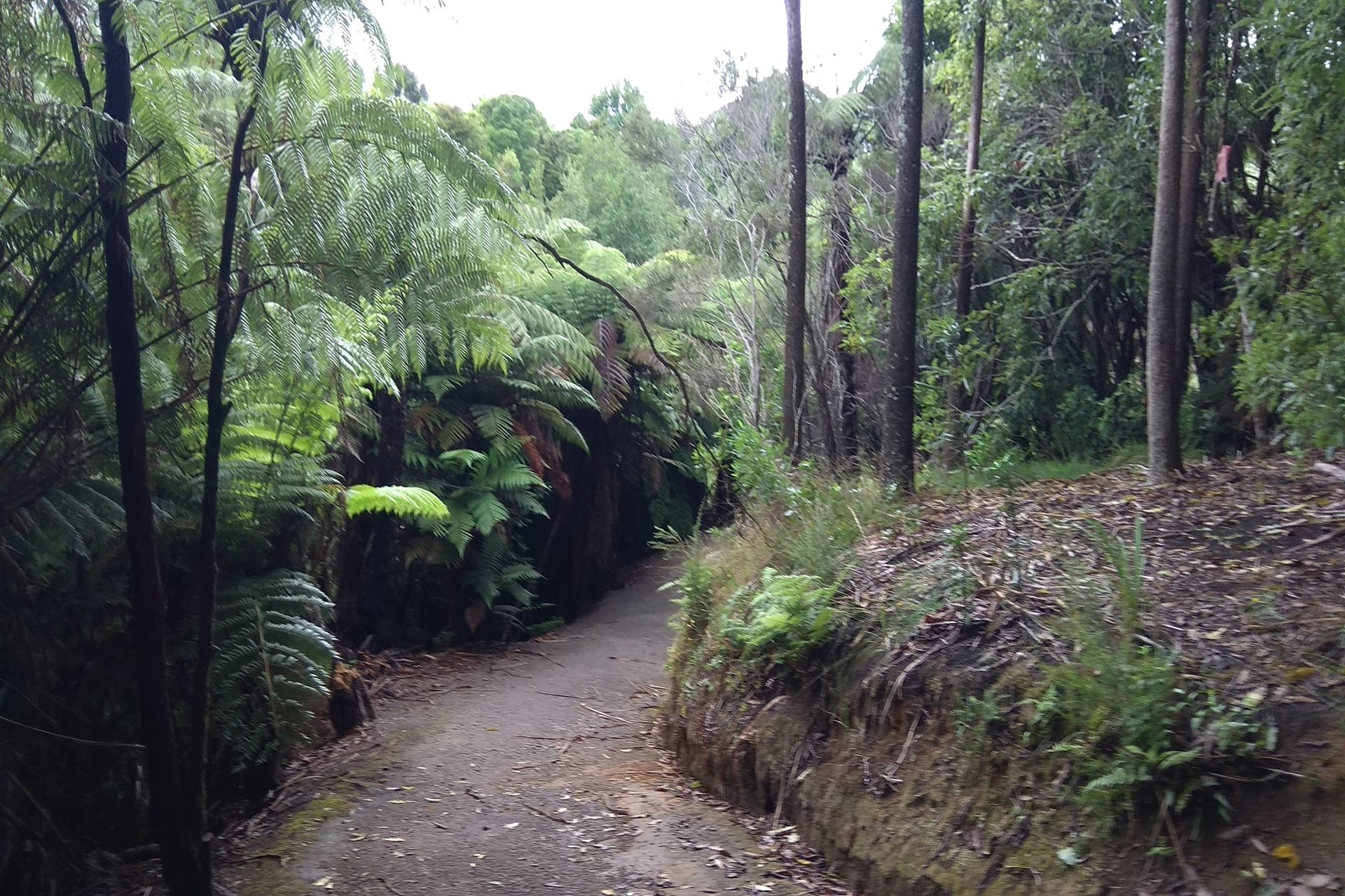 johnson-reserve-nature-walk