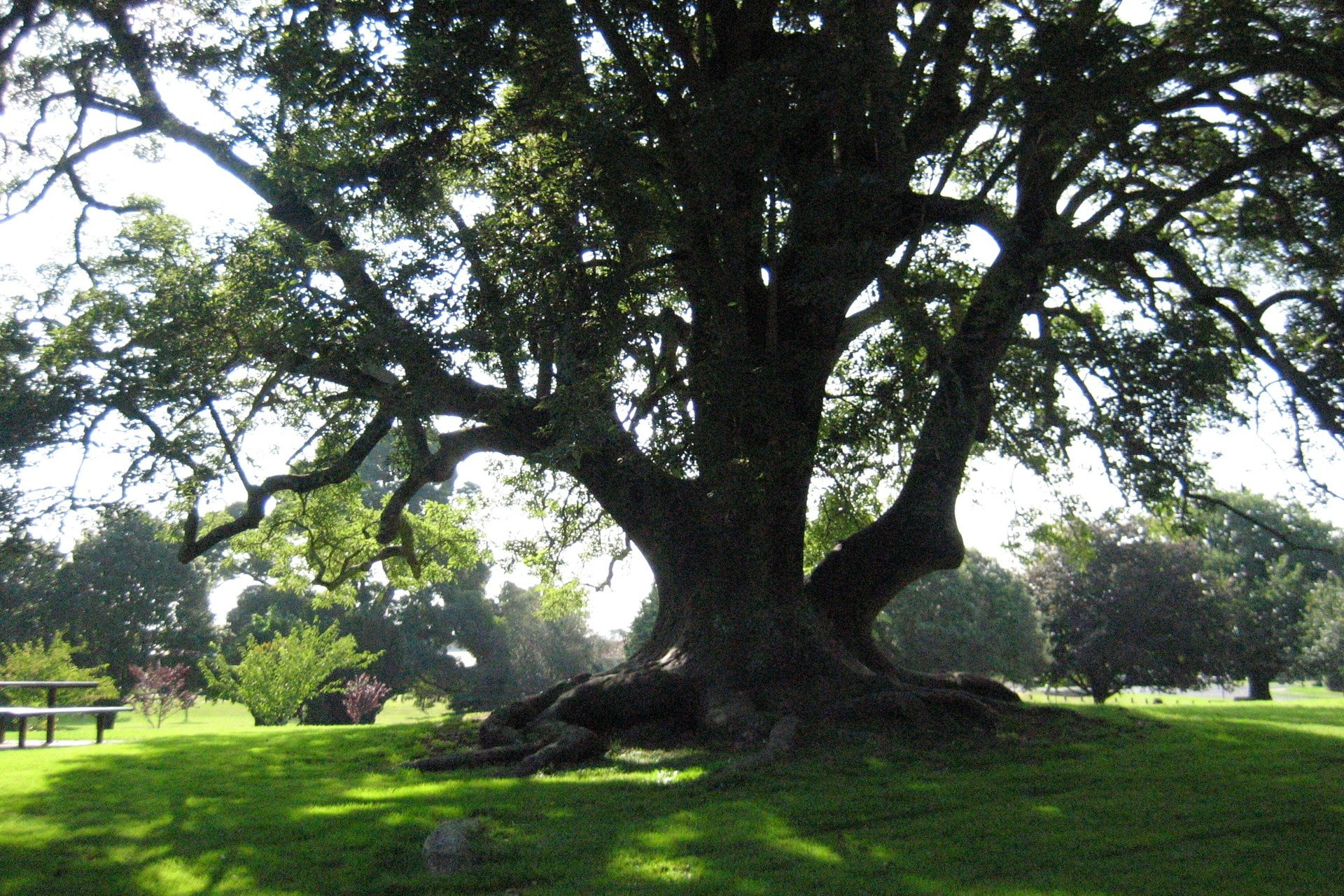 large-tree-for-kids
