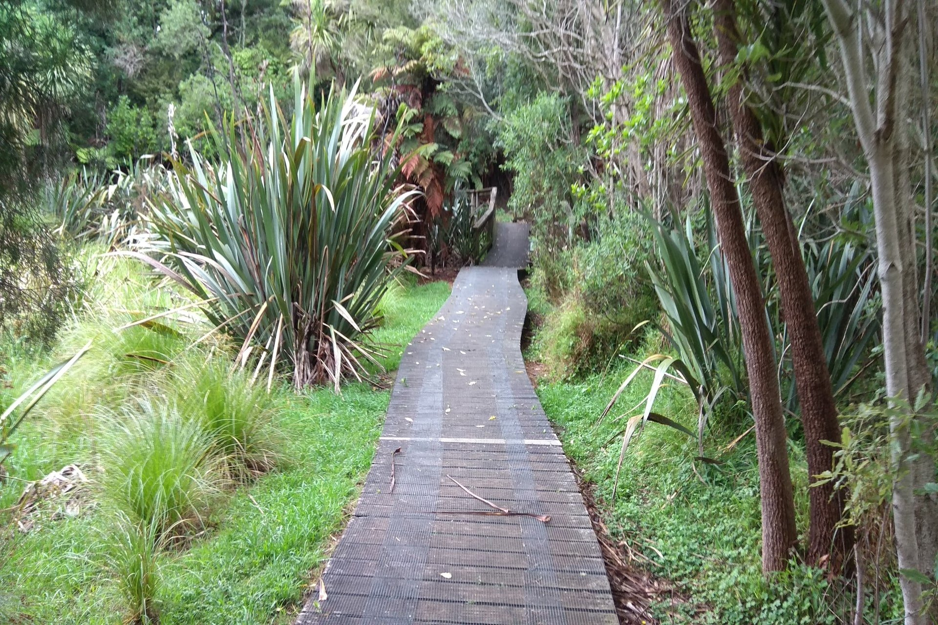 walkway-johnson-reserve-boardwalk