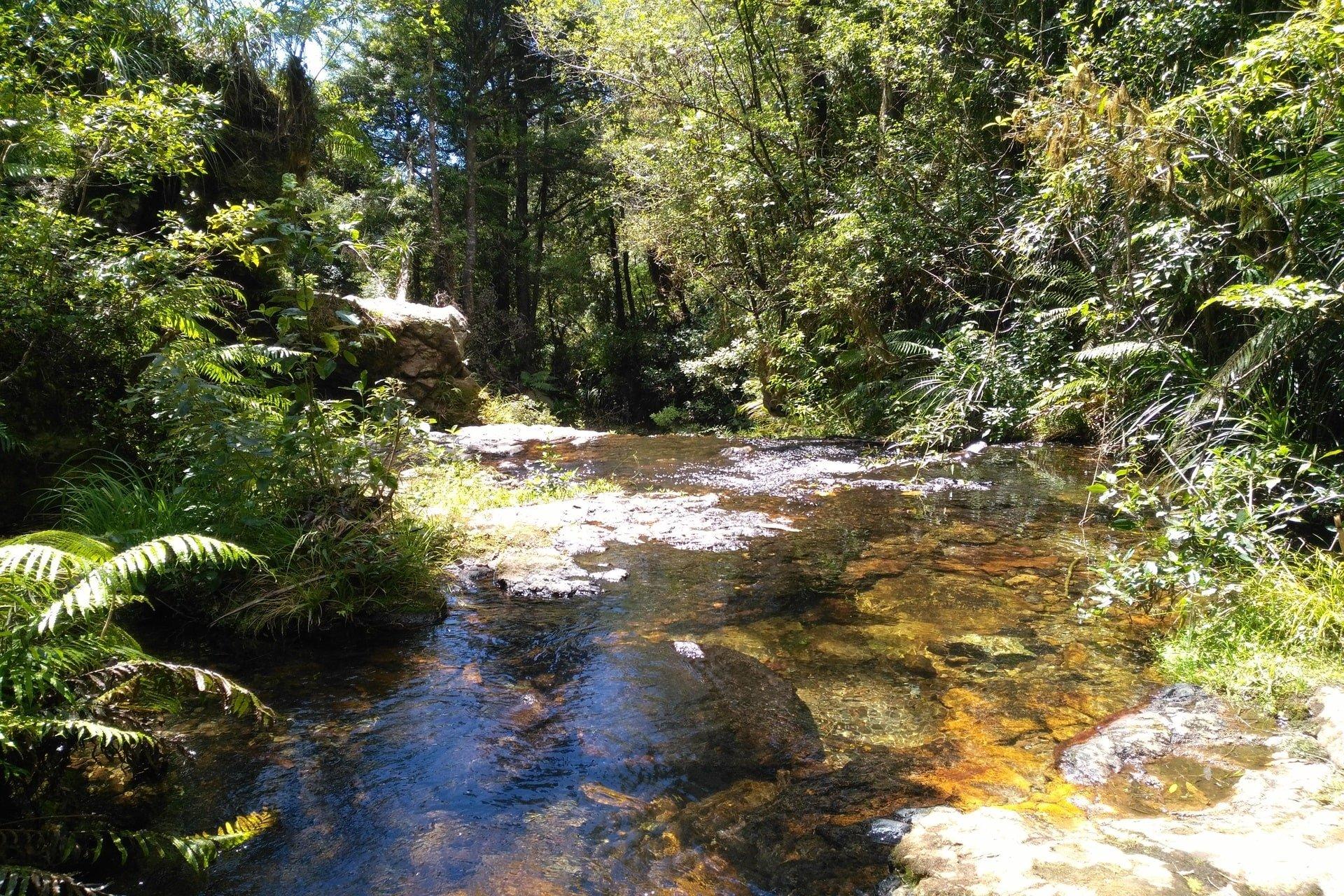 water-in-creek-whataroa-falls