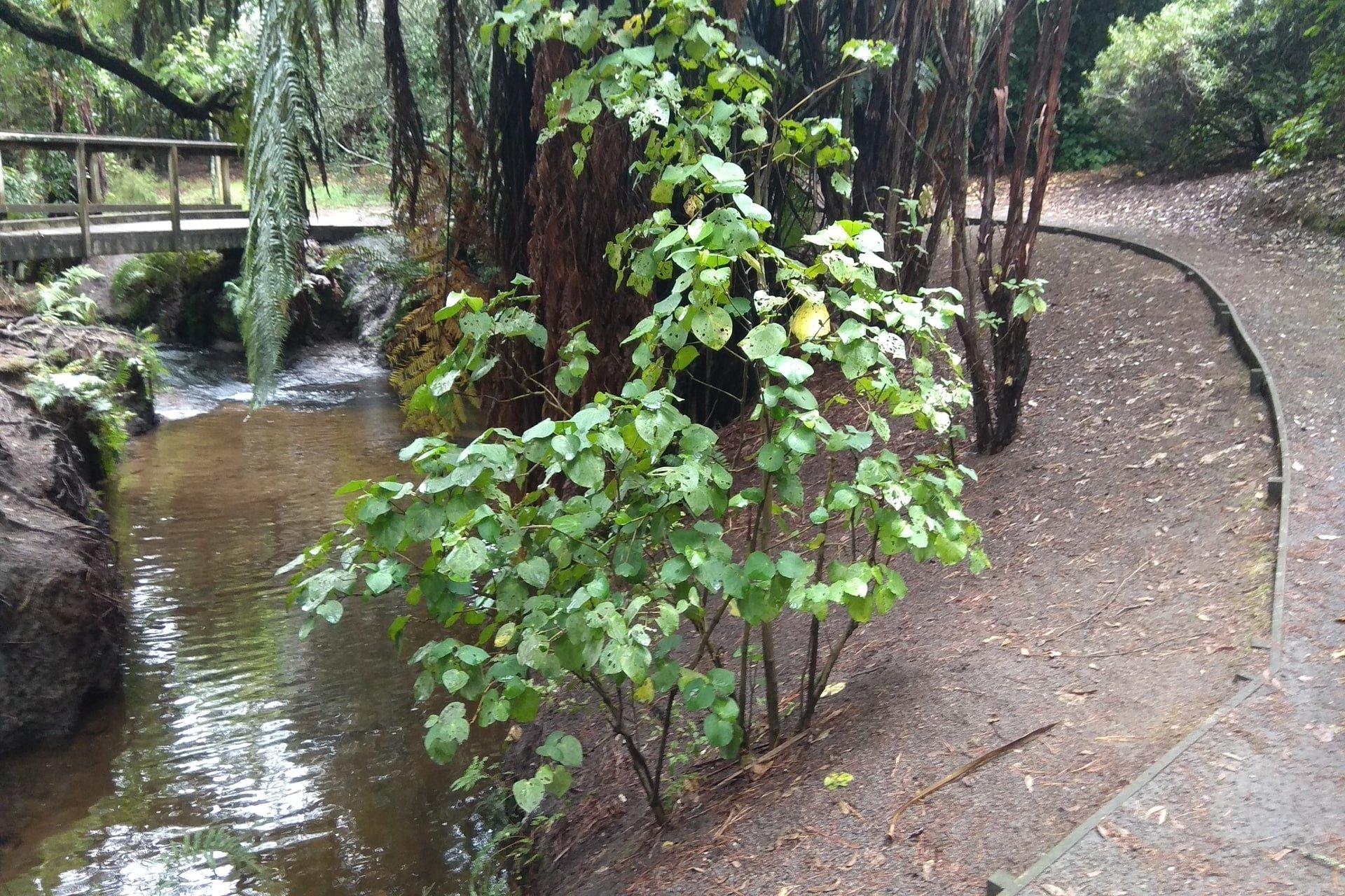 waterfall-walkway-johnson-reserve